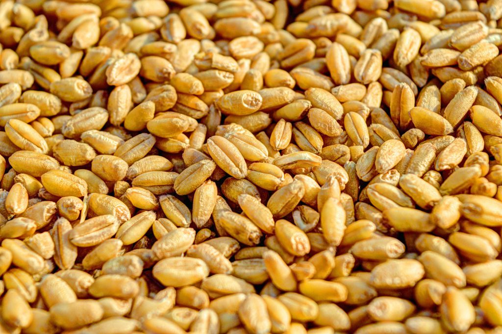 wheat-381848_1920